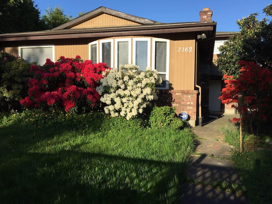 这是房前花园 仃车在房后