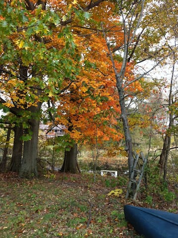 Our Red Oaks by the river