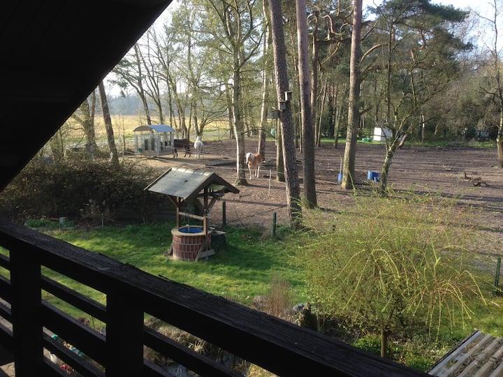 Ferienhaus - Urlaub mit und ohne Pferd