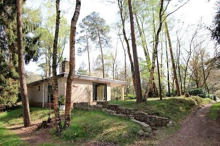Knus huisje op heerlijk bospark bij Vilsteren (Ov)