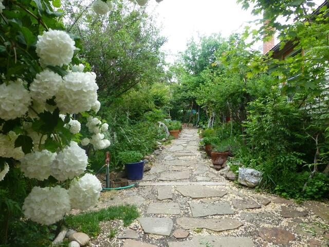 Step into the magic garden!