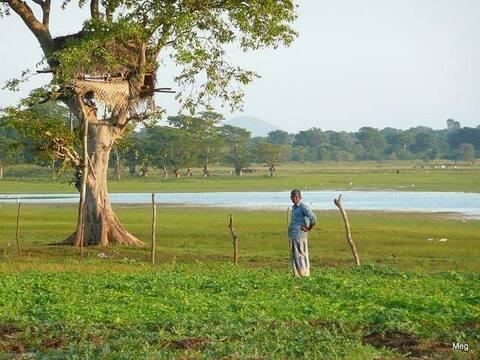 Meegalewa Homestay, Anuradhapura.