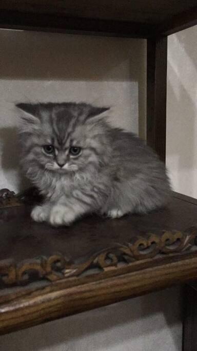 家里养的猫NEO