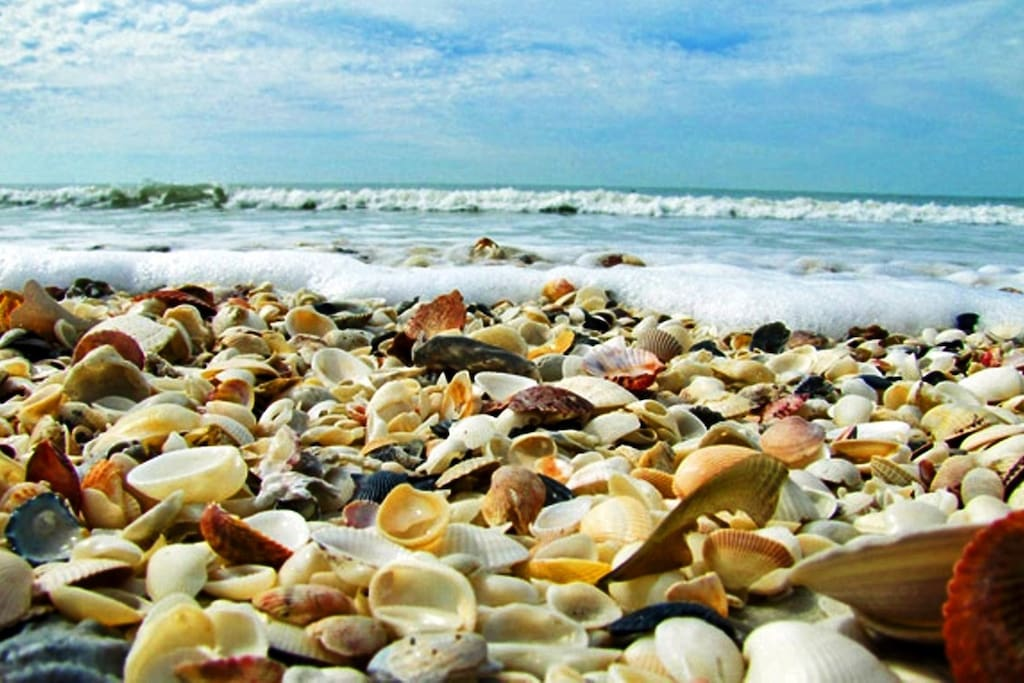 """Dreaming of shelling? Bobby says, """"It's pretty easy to find shells on Sanibel"""""""