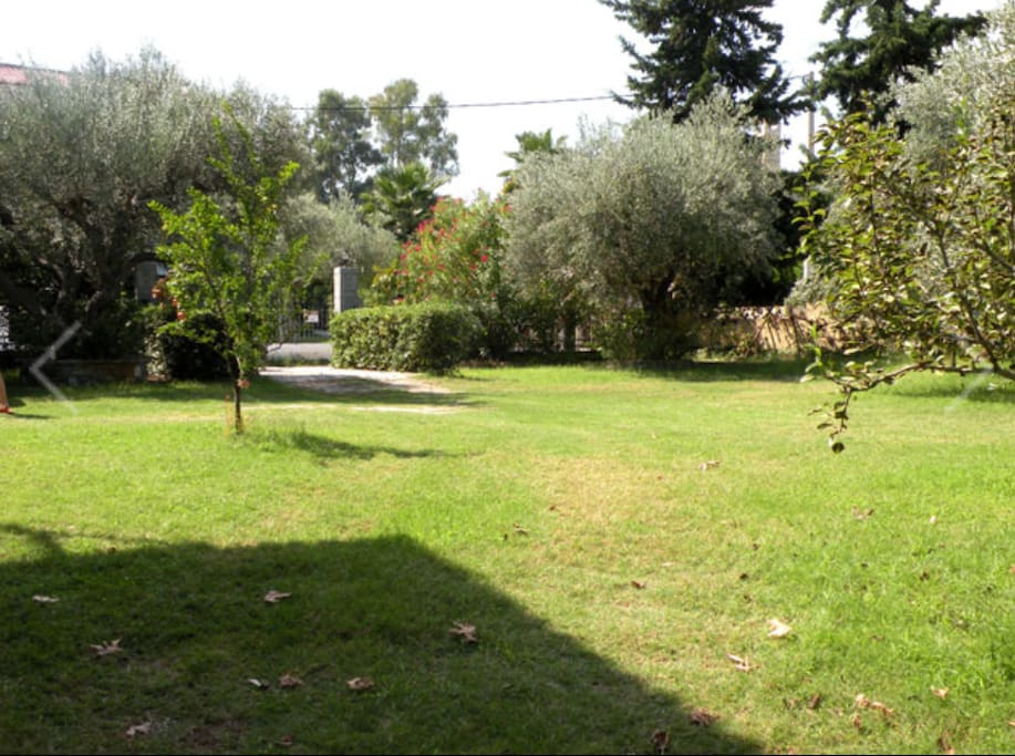 A sight of the beautiful garden with the olive trees.