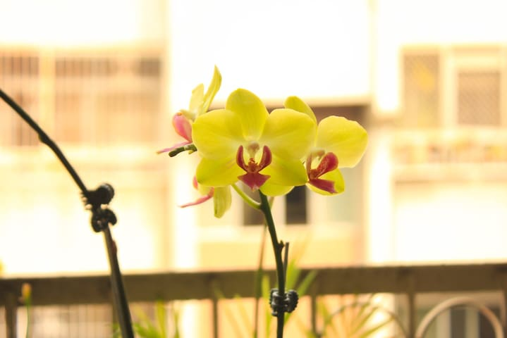 Orchids are from our balcony garden.