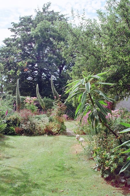 View of the side garden