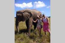 10% discount offered to our guests at Knysna Elephant Park.