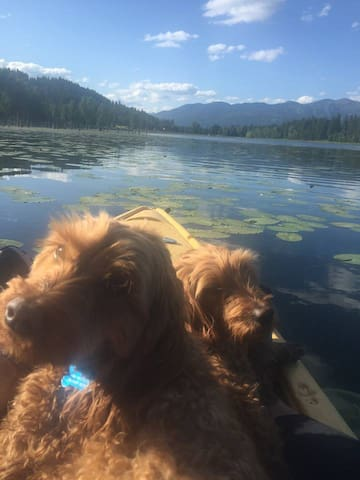 Kayaking on our private lake out our back door with my labradoodles