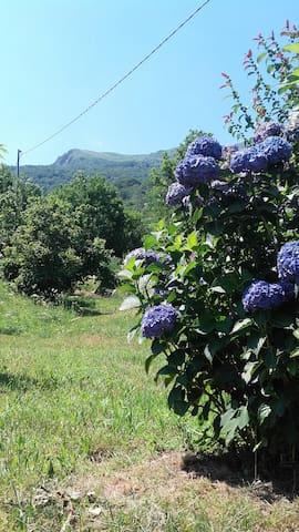 Ortensia e Monte Cerano
