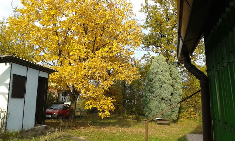 Lime tree in  autumn,  in front of the cabin