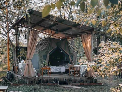 ACACIA GROVE | The Right Inn-Tent