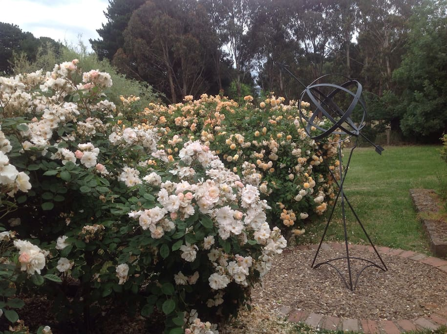 Roses blooming in the summer sun.