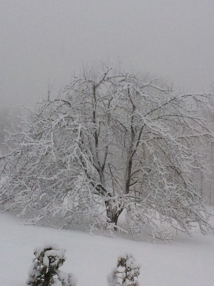 A winter's day photo