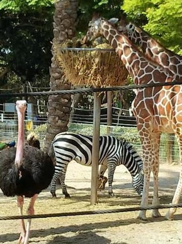 Hai Park, the biggest and most popular zoo of the North