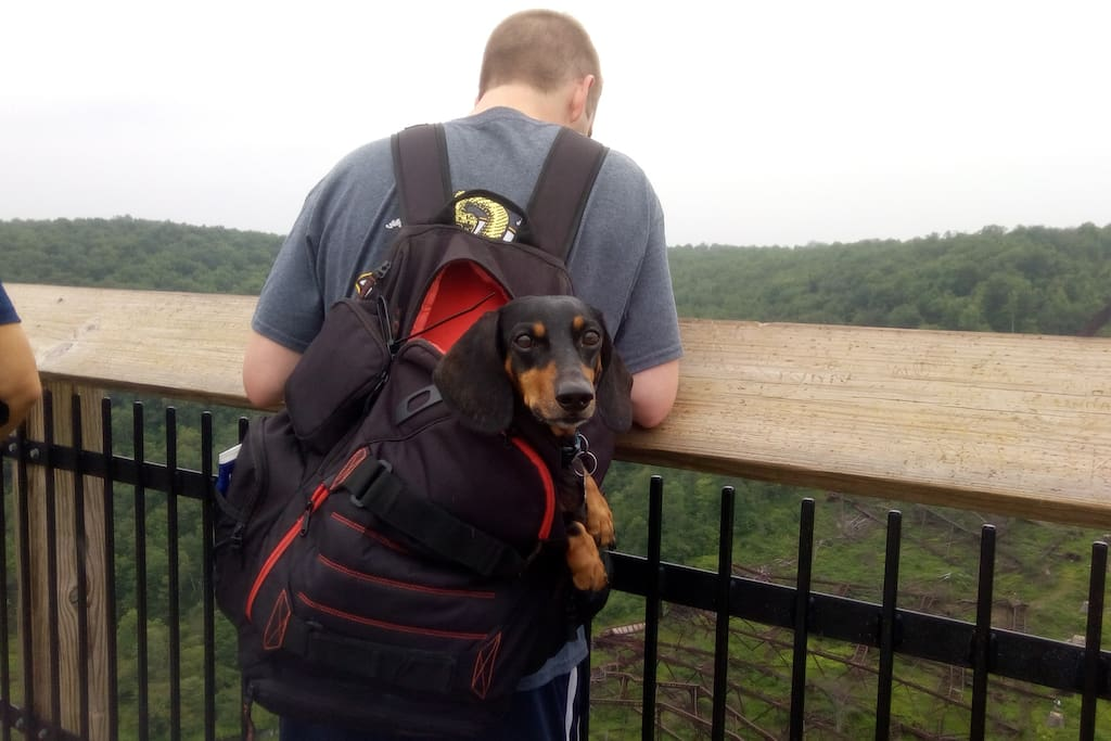 This is my backpack riding partner in adventure: Mr Doc