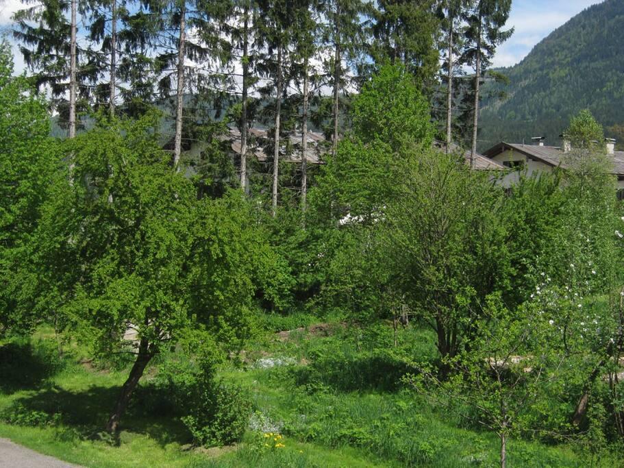 Permakulturgarten mit Spätherbsthimbeeren zum selbstpflücken