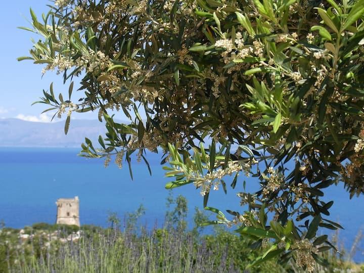 Casa Nino Scopello. Ap. Isola