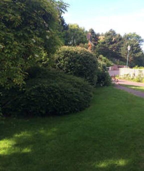 Jardin devant la maison