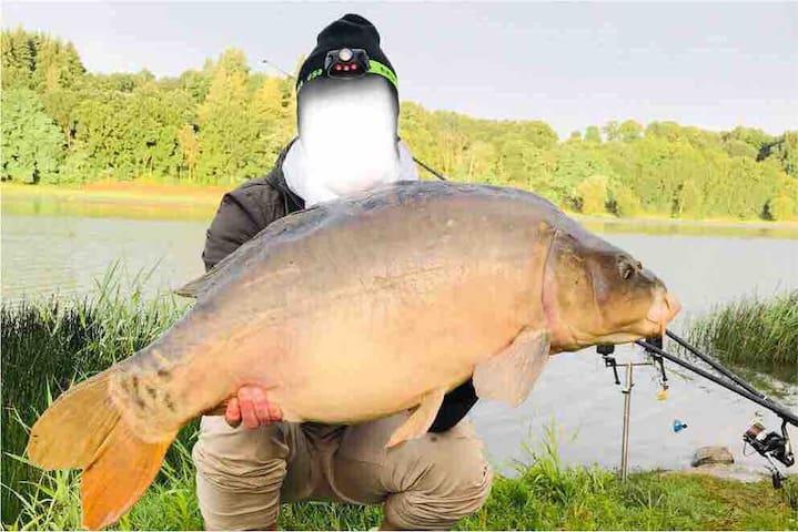 Carpe Jugon-les-Lacs