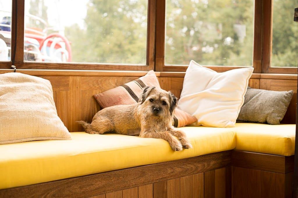 Wheelhouse ( dog not included )