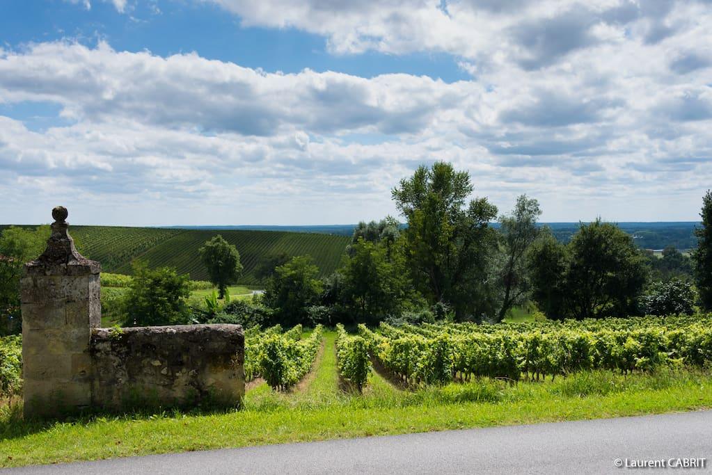 Jardin avec magnifique vue sur les vignes