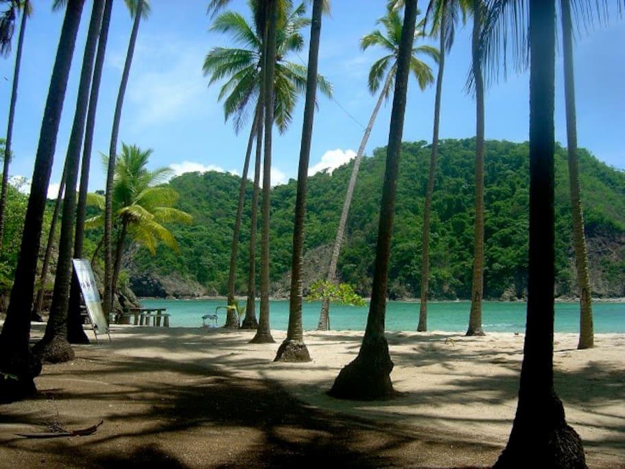 Coco beach stroll.