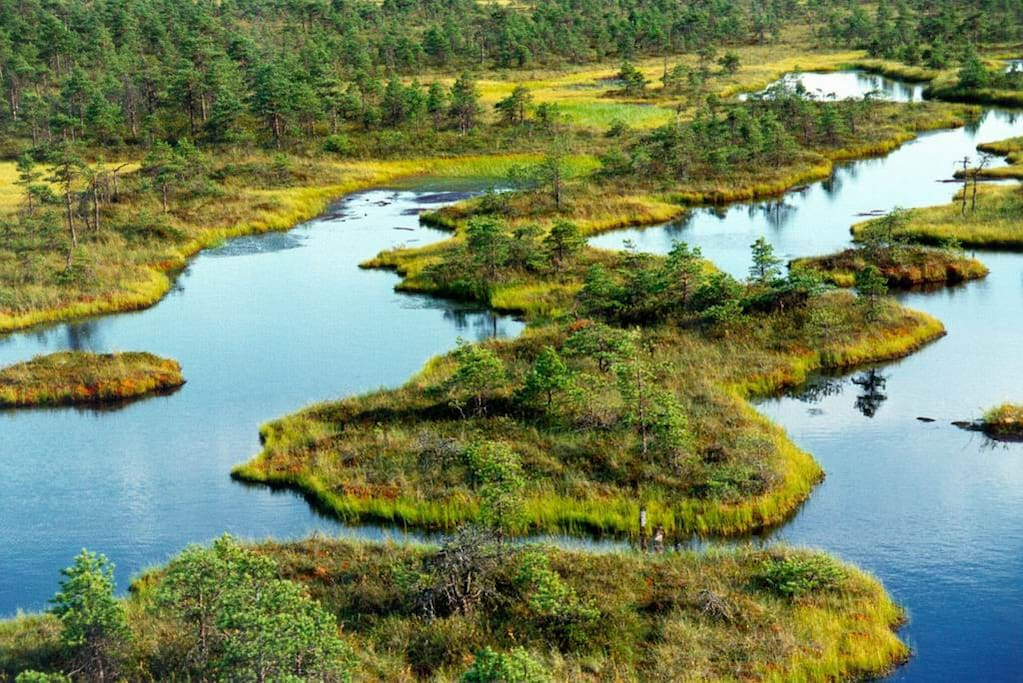 Mystical Endla Nature Reserve at our doorstep