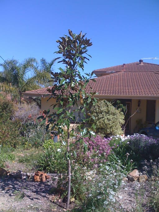 Front of house with native garden
