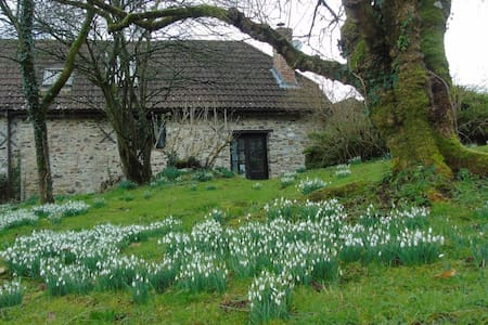 Snowdrop time at peaceful old Devon barn - Clayhidon - House
