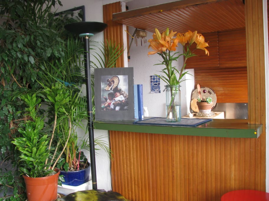 ficcus plant and other  gorgeous plants **view of kitchen