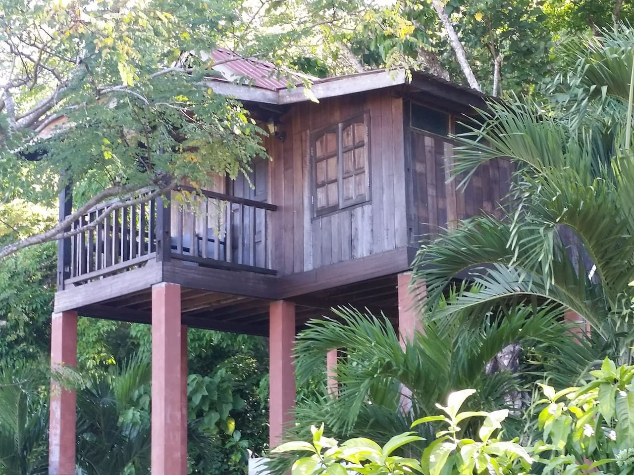 The Tree Top House