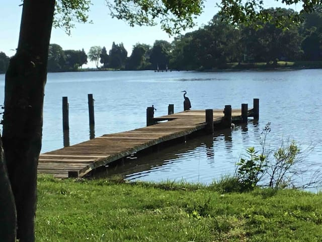 Front dock with blue heron