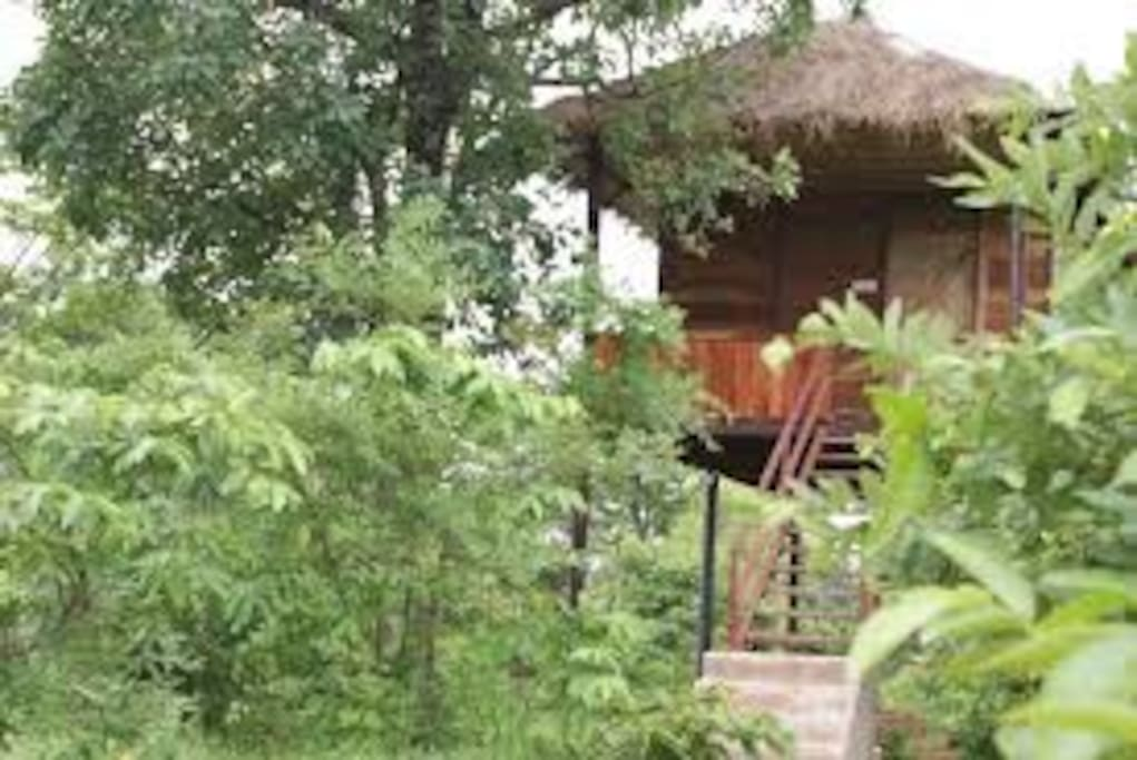Machaan hut