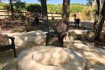 Relax and drink your morning coffee by the fire pit with the alpacas!! You will likely find us here on the weekends!
