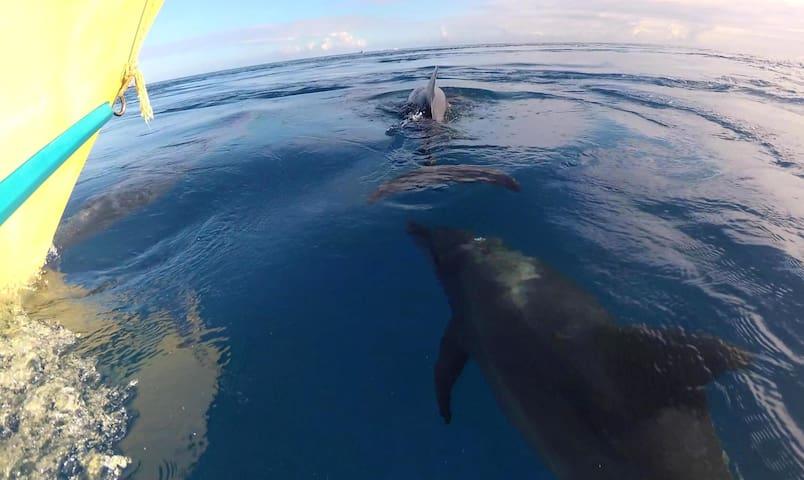 sorties dauphins