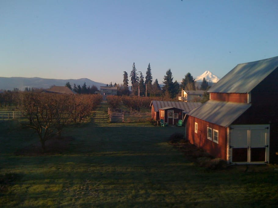 View of the Barn, orchard and Mt. Hood from South Deck