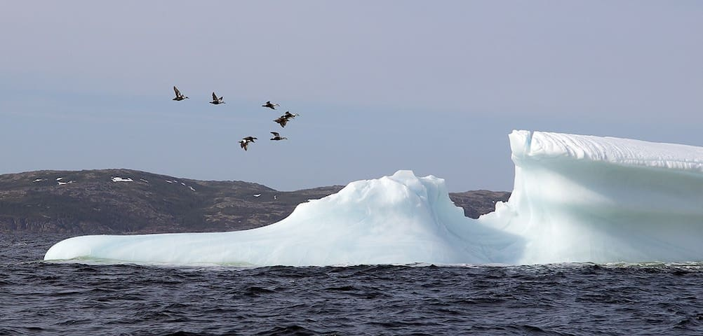 View icebergs right from your room B&B is located right along iceberg alley!