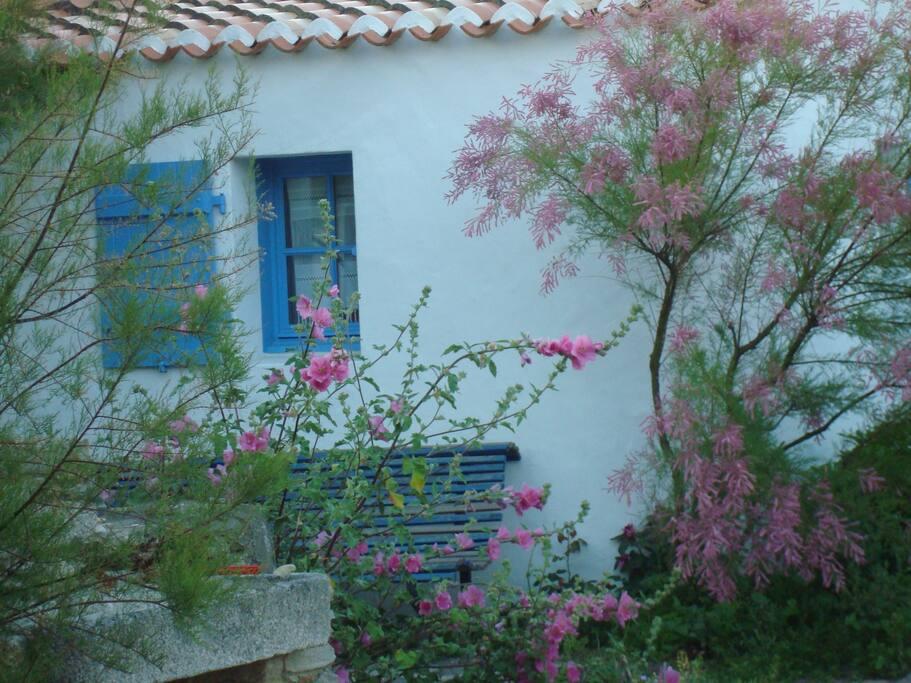Environnement fleuri dans une cour
