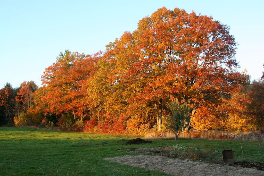 The back field in Fall