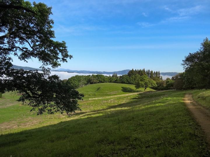 Country Peace near Glen Ellen