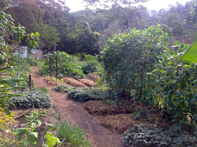 Noosa Hinterland Self-Sufficient Farm Tent site 4