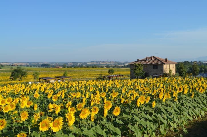 Podere Molinaccio with private pool - Panicale - House
