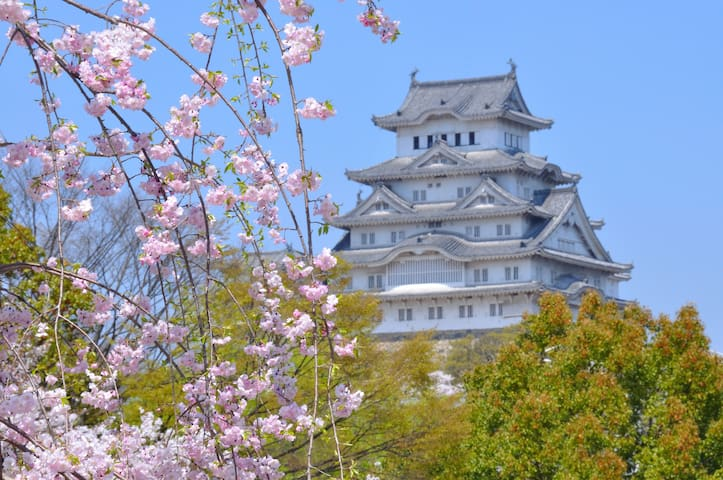 You can see beautiful Sakura with Himeji Castle in Spring. 40 min by train.