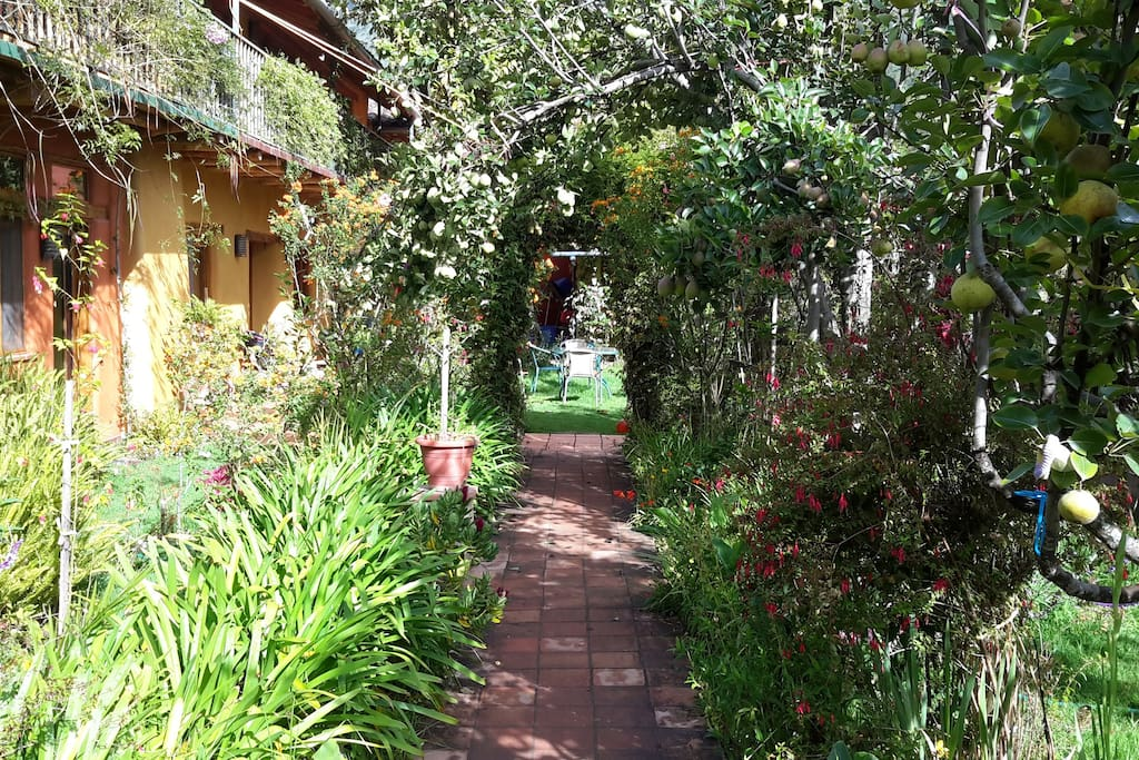 Walkway through garden to courtyard.