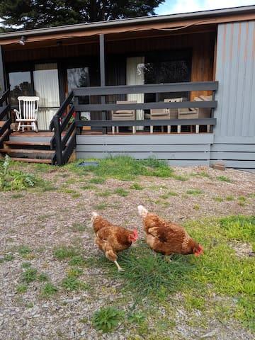 FUN Rural 7 acres Peninsula Hot Springs Brewery