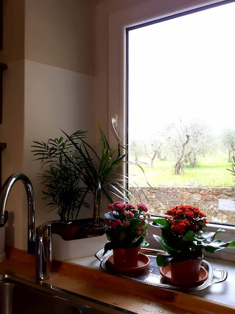 Lovely flat close to Florence city centre