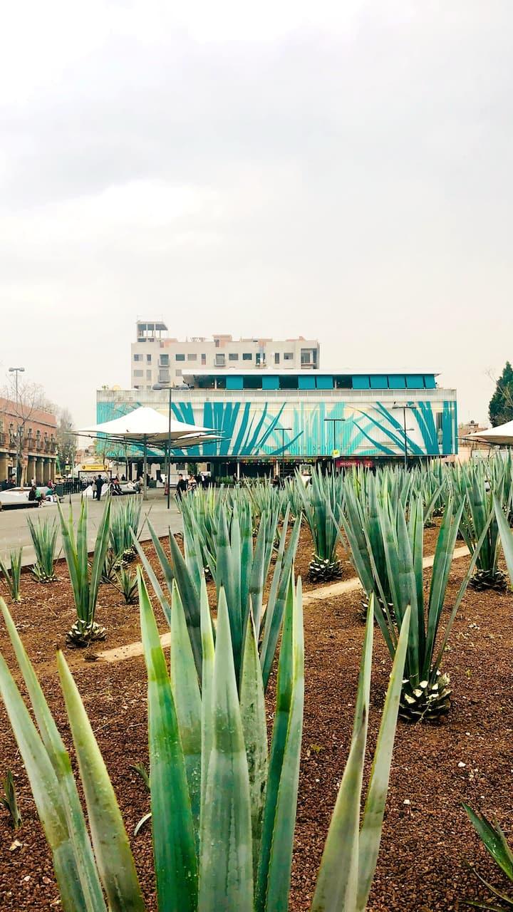 Museo del Tequila y Mezcal