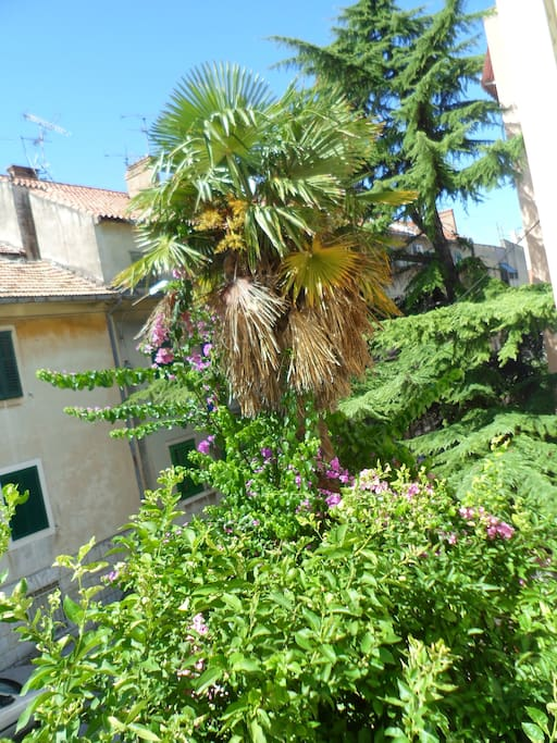 view from living room into the garden with dates, lemon trees etc.