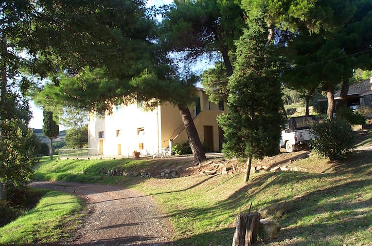 Casa Freddani - Livorno - House